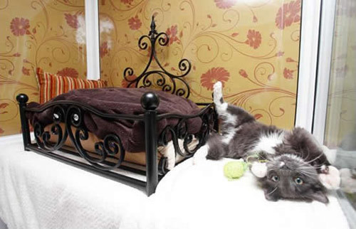 hotel-for-cats2-177193-1368184735_500x0.