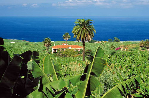 Biệt thự nhỏ nhìn ra biển trên đảo Tenerife, hòn đảo lớn nhất của Canary.