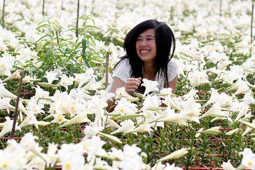 Pose hình giữa vườn hoa trắng.
