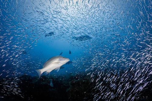 Rặng san hô Ningaloo ớ phía tây nam Austrailia dài 260 km với những vỉa đá ngầm lớn là nơi sinh sống của nhiều loài động thực vật dưới biển.