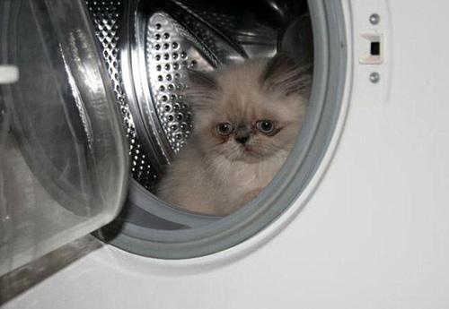 Máy giặt cũng là nơi trú ngụ yêu thích của hai chú mèo. Ảnh: KNS News.