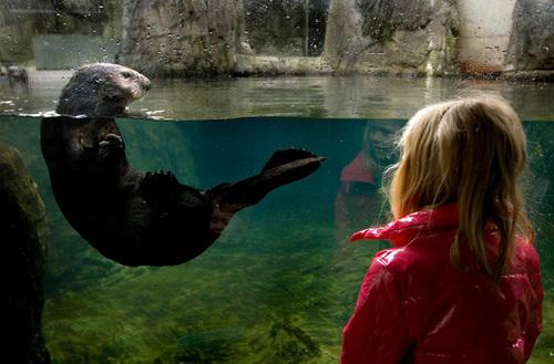 Cô bé đang mải mê ngắm động vật ở Viện hải dương học Vancouver.
