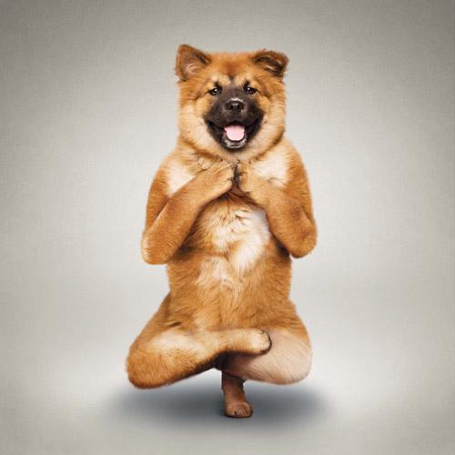 yoga-1-725836-1377109229.jpg