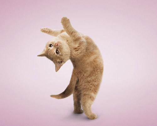 yoga-12-512756-1377109230.jpg