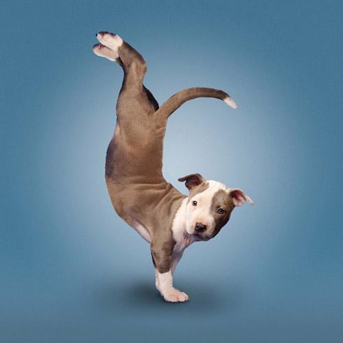 yoga-7-701589-1377109229.jpg