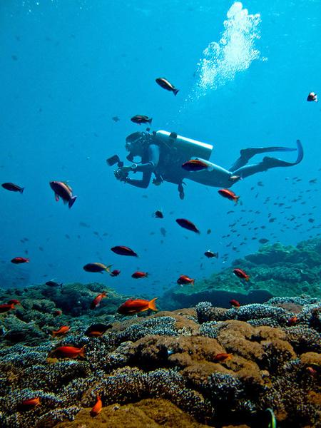 Du khách lặn biển ngắm san hô và các loài cá nhiều màu ở Bali.