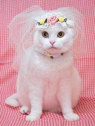 Nhà thiết kế trên chia sẻ: 'Trang phục cho chó đã phổ biến suốt 20 năm qua nhưng còn mèo thì chưa. Lúc nhìn thấy chú mèo Pin, đột nhiên một ý nghĩ nảy ra trong đầu, tôi muốn mặc váy cho nó. Khi không mặc quần áo, cô nàng chỉ là một con mèo bình thường nhưng lúc đã khoác trên mình những bộ váy đẹp trông nó thật tuyệt vời'.