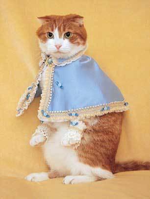 Takako cho hay, ban đầu cô may quần áo cho mèo chỉ vì để cho vui nhưng không lâu sau, nhà thiết kế ấy mở cửa hàng bán quần áo cho mèo qua mạng.