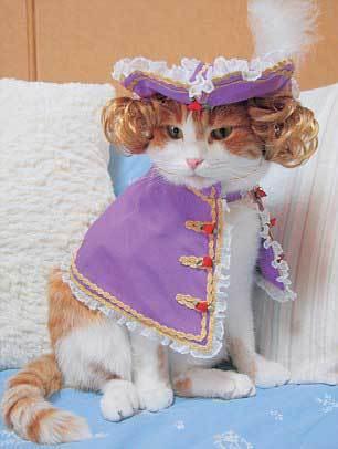 Chủ nhân cửa hàng bán đồ cho mèo cho các con vật cưng của mình mặc hơn 60 bộ váy thật đẹp, trong số đó có con còn mang cả khăn voan cô dâu hay đội chiếc mũ có hình chú voi.