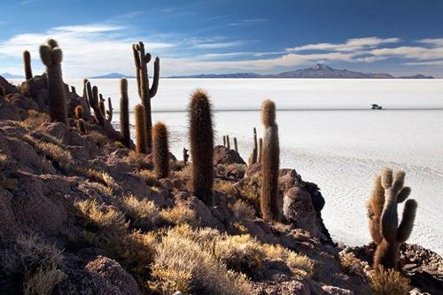 Chỉ xương rồng mới có thể mọc được ở điều kiện khắc nghiệt của Salar de Uyuni.