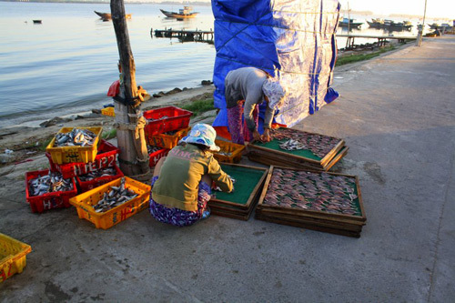 Ở Hội An, Quảng Nam, các chợ cá thường bắt đầu từ khi bình minh chưa ló rạng.