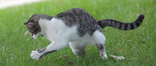 Nhiều bức ảnh cho thấy, Dexter giả vờ để con chuột đi nhưng sau đó nhanh chóng vồ lấy và cấu xé
