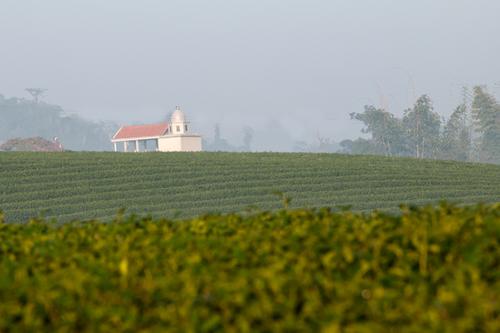 Ngôi nhà nằm trên đồi chè mang dáng dấp như một nhà thờ cổ ở miền quê châu Âu.
