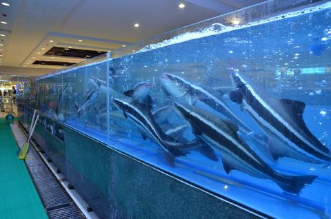 Khách hàng có thể tự tay lựa chọn hải sản.
