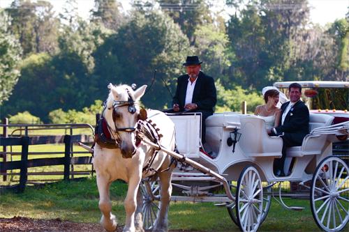 Nếu tổ chức tiệc cưới ở không gian rộng rãi, bạn có thể tổ chức đón dâu bằng xe ngựa độc đáo.