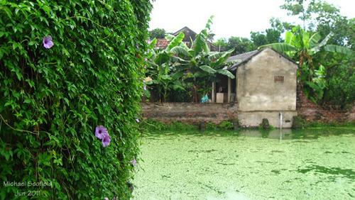 Những ngôi nhà ngói nhỏ, nằm giữa vườn cây, ao cá là hình ảnh quen thuộc dễ dàng bắt gặp nơi đây.