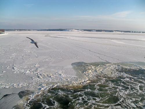 Mùa đông,ven bờ biển Baltic nhiều chỗ đóng băng. Đâu đó có những cánh chim hải âu chao lượn.
