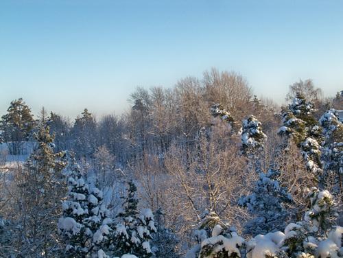 Mùa đông, những khu rừng như được khoác một lớp áo mới.