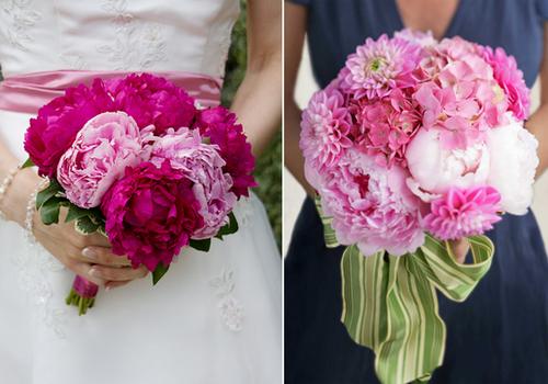 Nhiều người ưa chuộng mẫu đơn hồng vì màu sắc phớt nhạt của nó, số khác lại thích mẫu đơn hồng đậm.