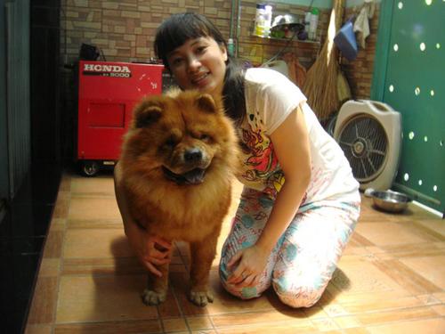 Bạn Nguyễn Thị Thu Trang chia sẻ: 'Mình gặp Bibi từ lúc mới sinh và mang máy bay về Việt Nam, đến nay Bibi đã được 1 tuổi rưỡi. Bibi thuộc giống chó Chow Chow, rất thông minh, thích được nũng nịu và săn mồi rất giỏi'.