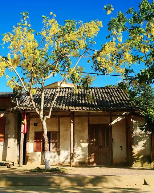 hoachuongvang1-766364-1368232349_500x0.j