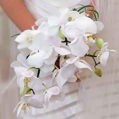 Lan là loại hoa cứng cáp, có thể giữ nét tươi tắn trong nhiều tiếng đồng hồ nên các cô dâu khá ưa chuộng.