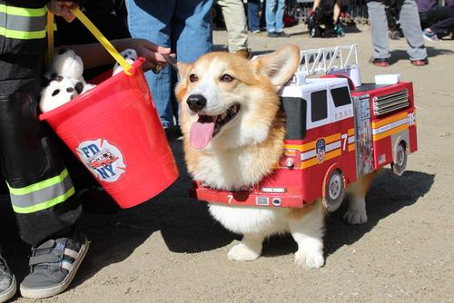"Xe cứu hỏa siêu ""kute""."
