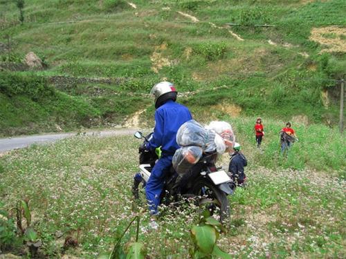 Một bạn 'đi phượt' phi xe máy vào cánh đồng hoa tam giác mạch