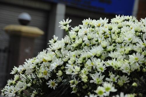 Đây là loại hoa