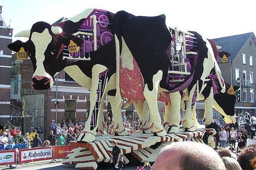 Hai con bò sữa cao gần 20 m.