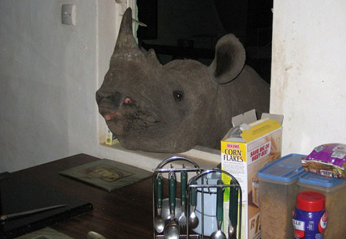 Jimmy pokes his head through the kitchen window at Humani guesthouse in Zimbabwae which is run by husband and wife team Roger and Anne Whittall