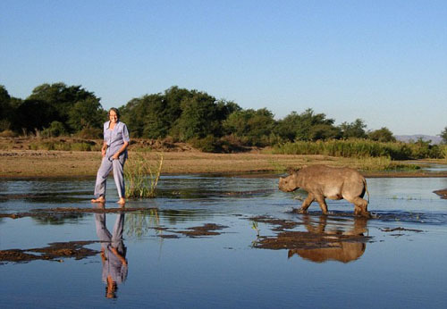 The two tonne beast takes a stroll with Anne across the flat wild plains of Zimbabwe