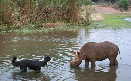 Jimmy cools off in a water hole as one of the family's dogs looks on inquisitively