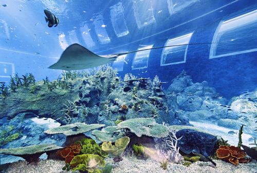 Khu đại dương nhân tạo mô phỏng 49 môi trường sống khác nhau tại Đông Nam Á.