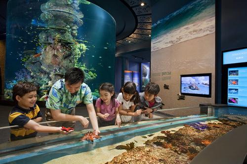 Các em nhỏ thích thú trải nghiệm cảm giác sờ những chú sao biển thật.