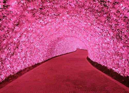 Các 'đường hầm' bằng cây đủ màu sắc.