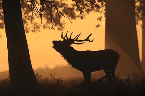 Ian Lewry of Skellingthorpe, Lincolnshire, for this image of a stag greeting the dawn in Richmond Park, London