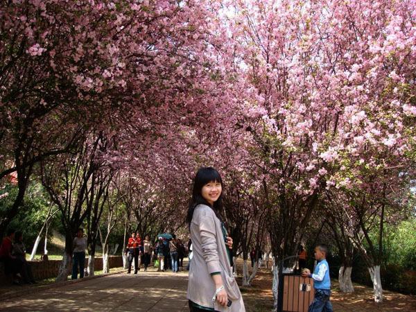 Thành phố hoa Côn Minh rạng rỡ trong mùa xuân.