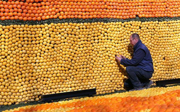 Cần tới 145.000 kg trái cây để xây dựng hết tất cả những công trình trong lễ hội.