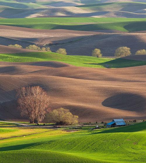 Palouse quanh năm được bao phủ bởi màu xanh và màu đất trùng trùng điệp điệp.