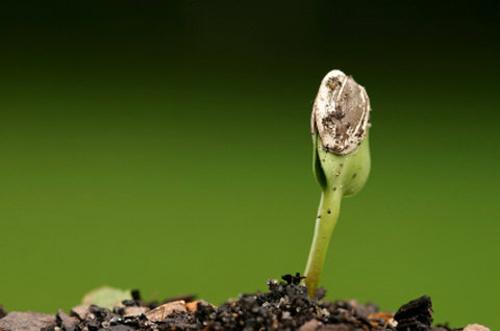 seed6-551346-1368294857_600x0.jpg