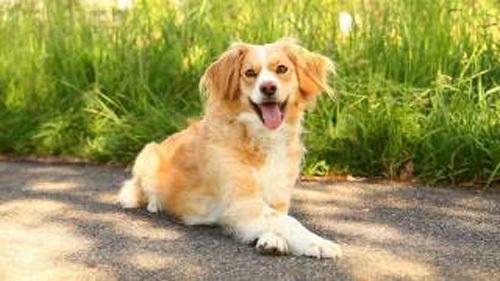 dog2-214121-1368280542_600x0.jpg