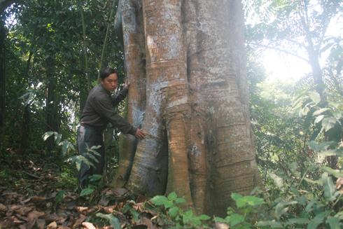 Theo anh Ngải Seo Dìn thì trước đây, trong rừng Cấm có cả tượng chó đá cổ.
