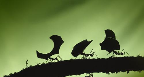 ant1-532148-1368291125_600x0.jpg