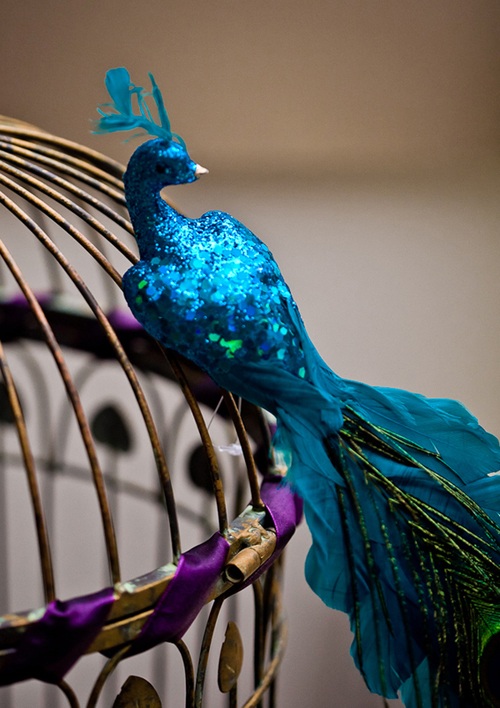 Hình ảnh chú chim công xanh là cảm hứng chính cho toàn bộ trang trí.