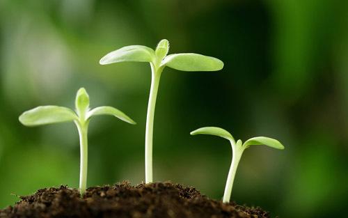 grow2-531938-1368268807_600x0.jpg
