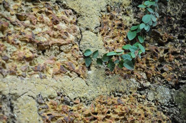 Nếp đá ong của ngôi làng.
