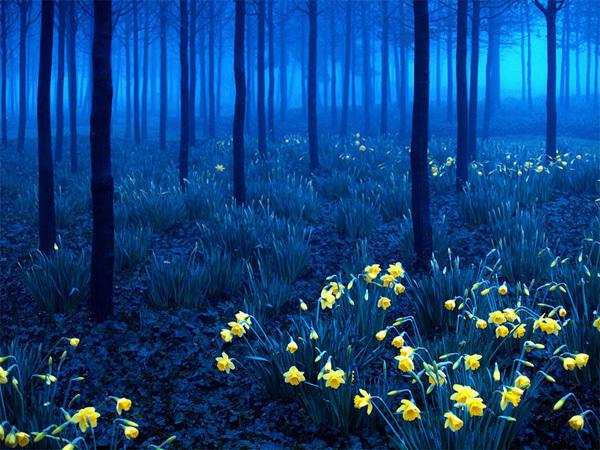 """Rừng Đen nằm ở miền tây nam nước Đức với rừng thông bạt ngàn, các ngọn đồi và thung lũng xanh mướt. Khu rừng được coi là """"lá phổi"""" của Đức với khí hậu quanh năm trong lành. Ảnh: andy linden"""