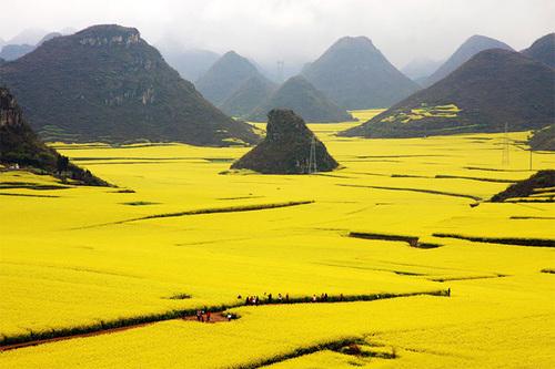 Biển hoa cải vàng rực rỡ cả một vùng ở Trung Quốc. Ảnh: +Lanzi