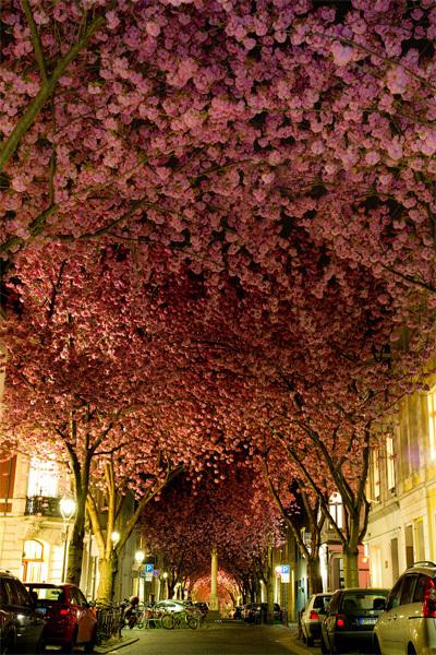 Con phố xinh đẹp ở Bonn, thành phố bên bờ sông Rhine thơ mộng của nước Đức. Ảnh: Adas Meliauskas
